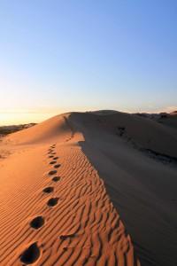 """Camel tracks in the """"Mini Gobi""""."""
