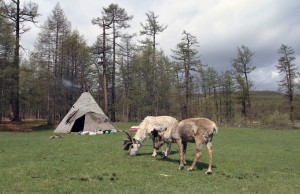 Teepee and reindeer owned by the 'reindeer herdsmen'.