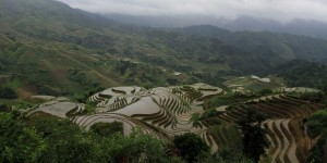 Rice terraces seen from above on the nearby peak.