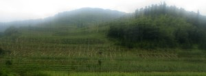 Blurred view of terraced gardens, seen from the bus leaving Da Zhai.