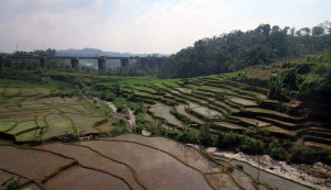 Terraced rice paddies outside of Bandung.