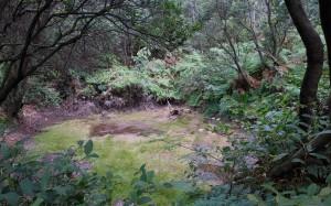 The jungle near Kawah Puthi.