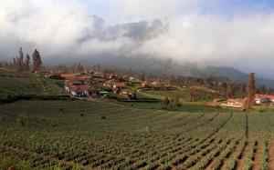 Farm in Cemoro Lewang.