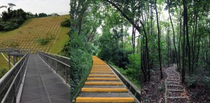 Different types of pathways foind along the Southern Ridges Walk.