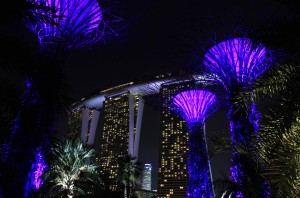 """""""Supertrees"""" with the Marina Bay Sands Hotel in the background."""