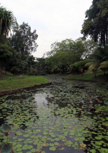 Pond in the Botanical Gardens.