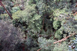 Looking down from the forest canopy.