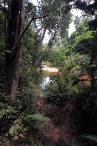 Tahan River seen through the rainforest.