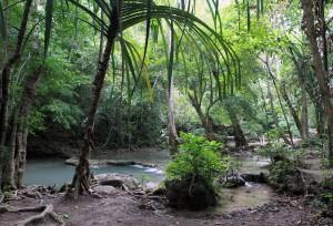 The jungle surrounding the stream.