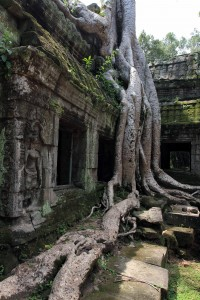 Roots and stones merged together in Ta Prohm.