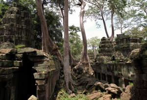 Trees sprouting out of the rubble in Ta Prohm.