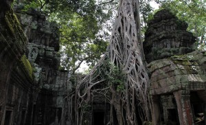 More tree growth on the ruins of Ta Prohm.