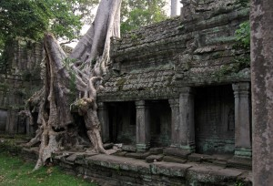 Tree growth on Preah Khan.