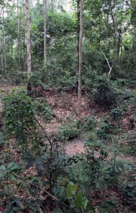Crater left by a B-52 in the jungle.