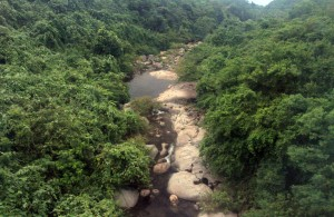 Stream in the jungle below the train tracks.