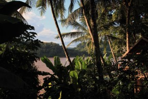 Looking through palms and banana trees at the Mekong River.