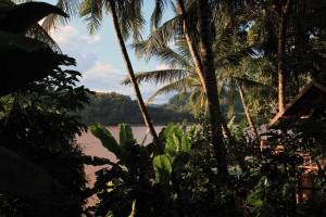Looking through palms and banana trees at the Mekong River.
