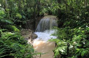 Side stream in the jungle.