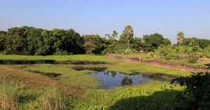 Rural Bangladesh.