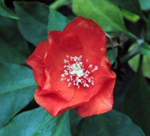 Flower in Baldha Garden.