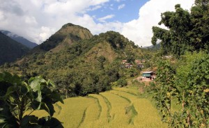 Rice terraces on the edge of Bahundanda.