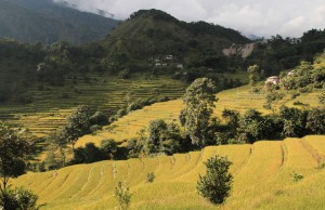Another view of the rice terraces on the outskirts of Bahundanda.