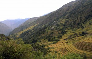 Closer view of the rice terraces.