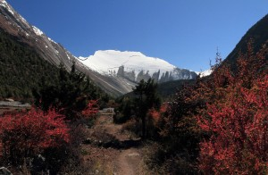 Red-leafed bushes crowding the trail with the Pangdi Danda ridgeline in the background.