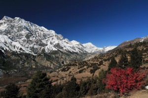 The beautiful trail with the Annapurna Himal on the left.
