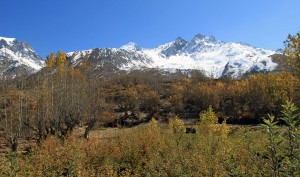 Trees showing their Autumn colors with the Muktinath Himal in the background.