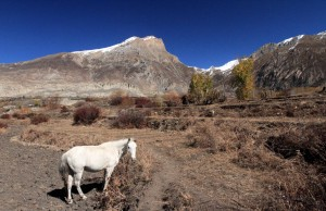 A white horse in the terraced fields.