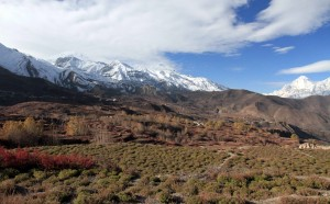 Terraced farms, Autumn trees, and the Muktinath Himal mountain range.