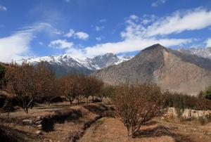 Orchards near Samle.