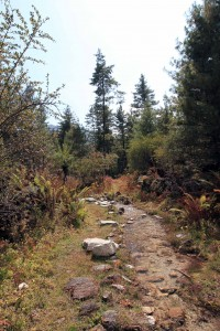 Another section of the trail through the forest.