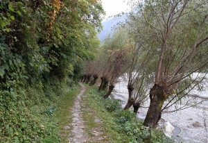 The stone laid trail, lined with trees, between Kokhethanti to Kalopani.