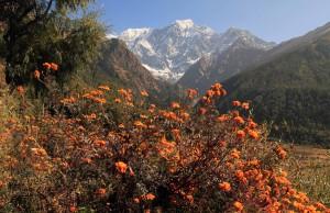 Flowers and the Nilgiri mountains.