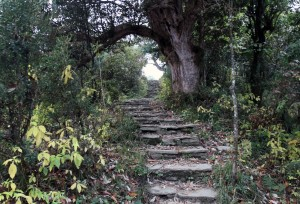 The trail leading up to Poon Hill.