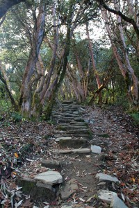 The trail from Ghorepani to Deurali Pass.