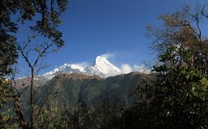 Annapurna South seen through the woods.