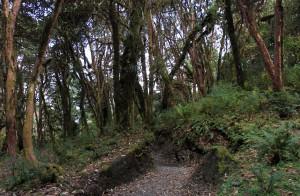The trail from Tadapani to Ghandruk.