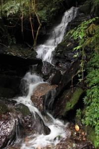 Stream cascading down near the trail.