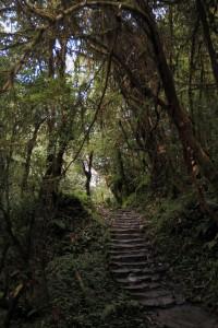 Stone steps through the rain forest.