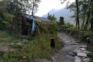 Stone hut slowly turning completely green.