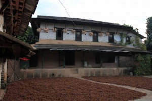 Harvested millet drying out in front of a house.