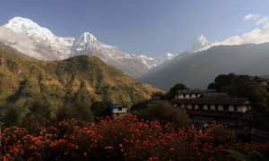 Annapurna South, Hiunchuli, and Machhapuchhre peaks (from left to right) towering above Ghandruk.