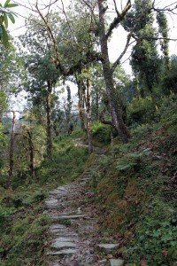 Stone steps leading up to Bhichok Deurali.