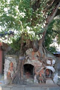 A tree overtaking a shrine.