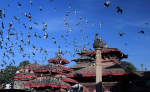 Many pigeons flying in the square.