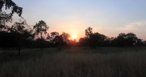 The sunset in Panna Tiger Reserve.