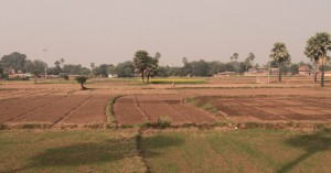 Farmland on the way to Bodh Gaya.